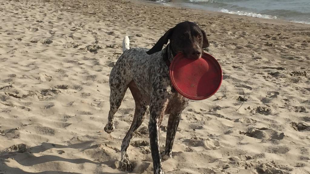 Sandbanks en famille avec un chien à la plage