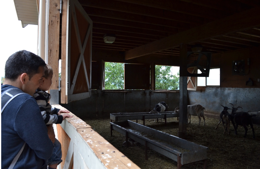 Carmelis Goat farm © Amélie Racine