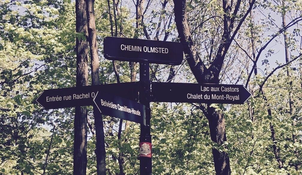 randonnée ou visiter le parc du Mont-Royal en famille