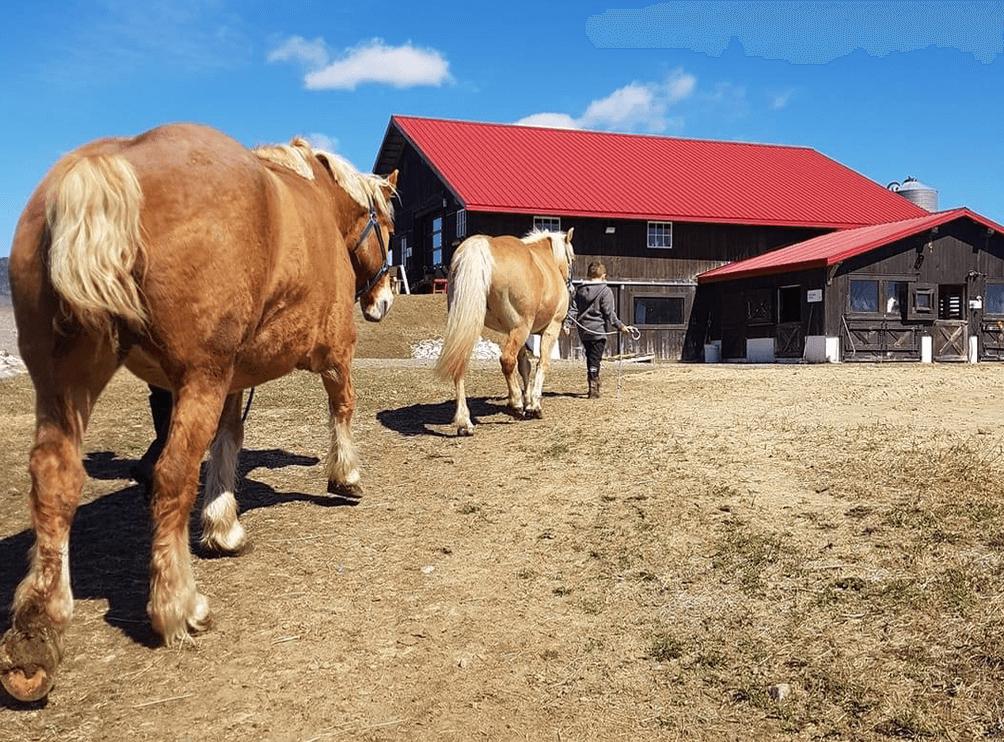Lisa Linton et Patrice Drouin de Cheval & campagne, équitation en famille
